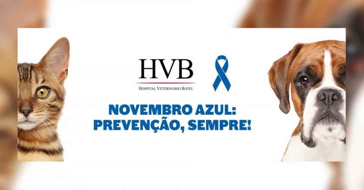 Novembro Azul: prevenção é a chave!