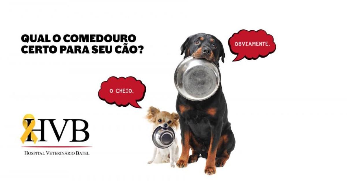 Qual o comedouro certo para seu cão?