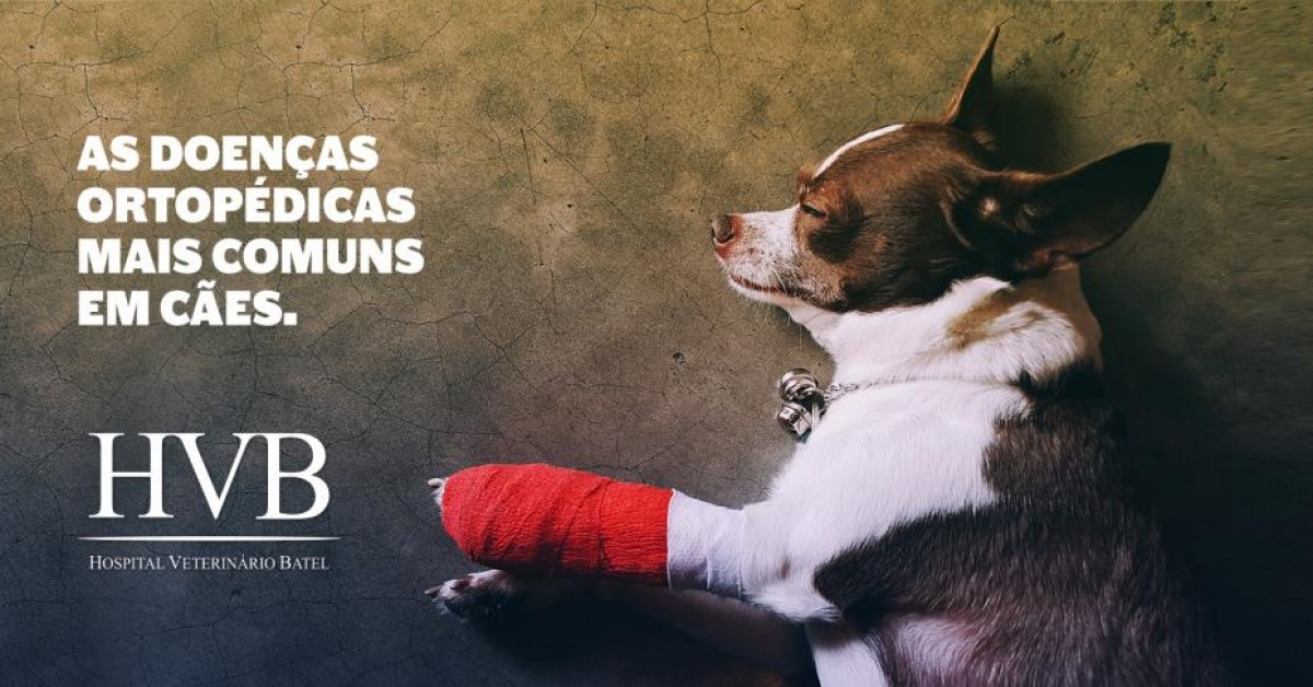 As doenças ortopédicas mais comuns em cães