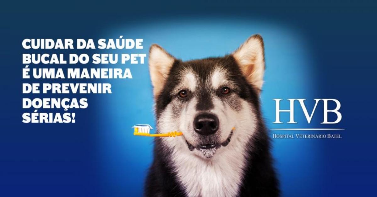 Cuidar da saúde bucal do seu pet é uma maneira de prevenir doenças sérias!