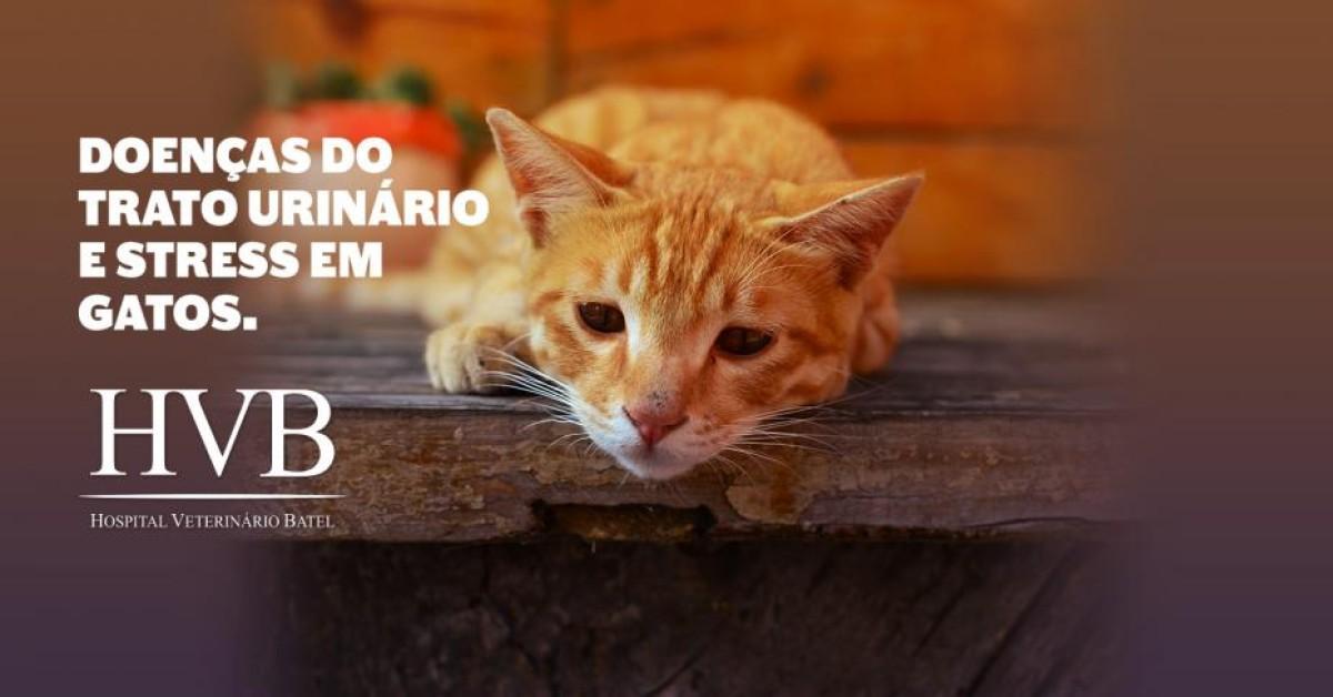 Doenças do Trato Urinário e stress em gatos