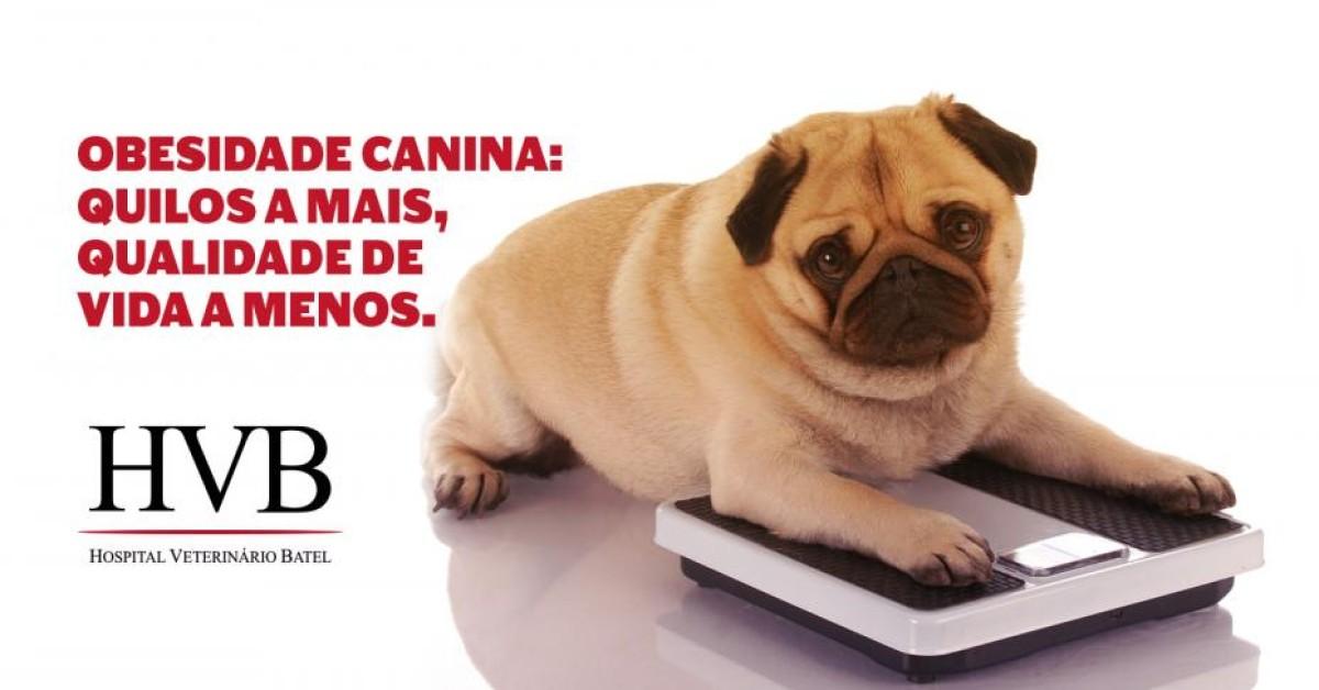 Obesidade canina: quilos a mais, qualidade de vida a menos.