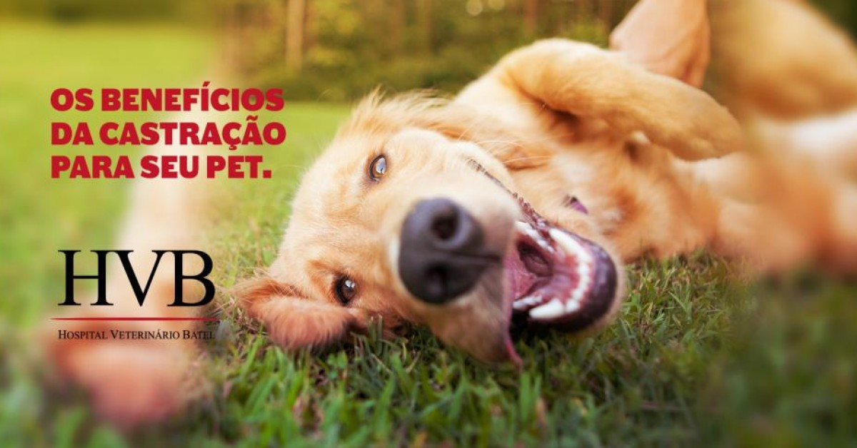 Os benefícios da castração para seu pet