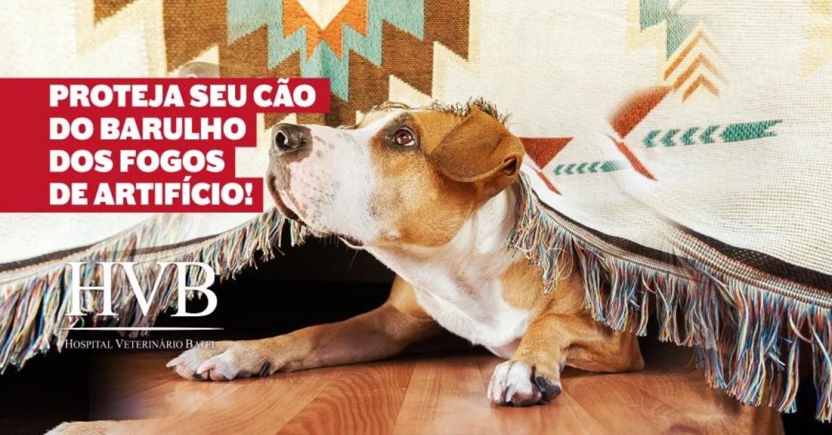 Proteja seu cão do barulho dos fogos de artifício!