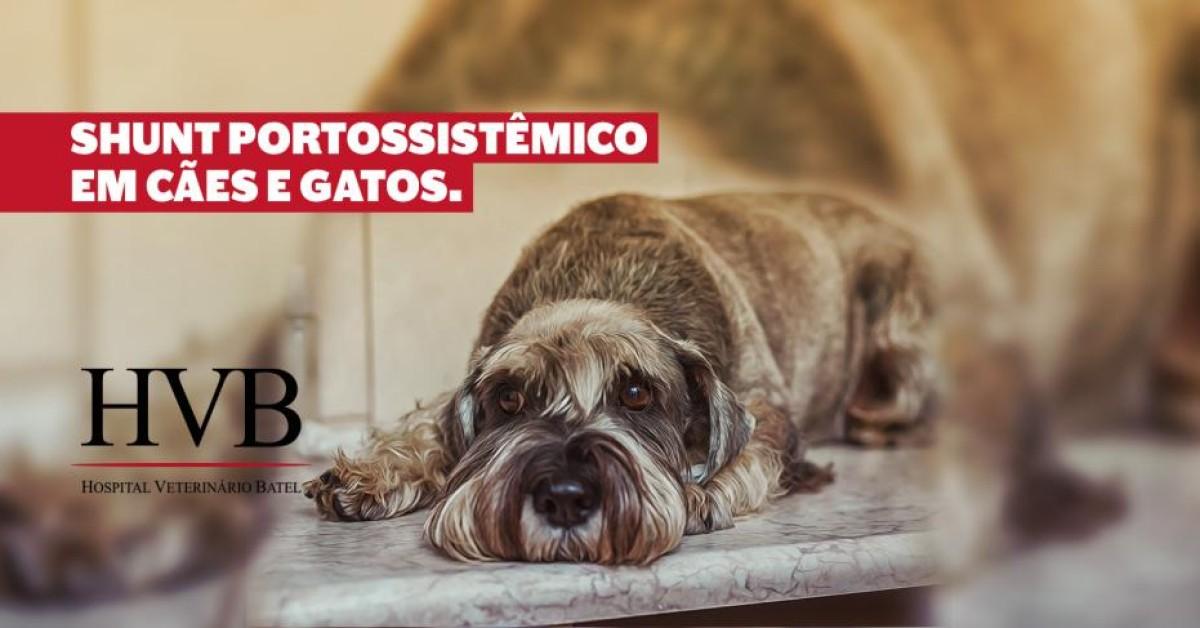 Shunt Portossistêmico em cães e gatos