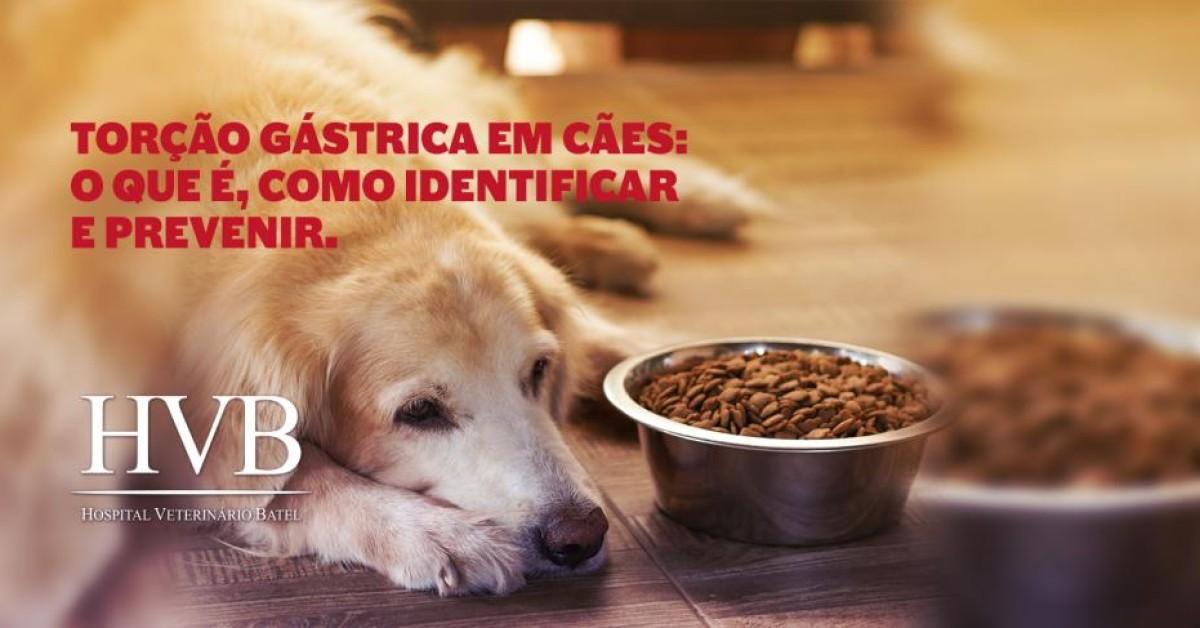 Torção gástrica em cães: o que é, como identificar e prevenir.