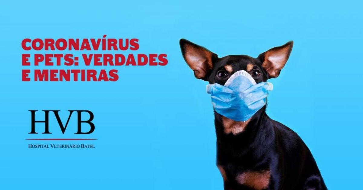 Coronavírus e pets: verdades e mentiras.