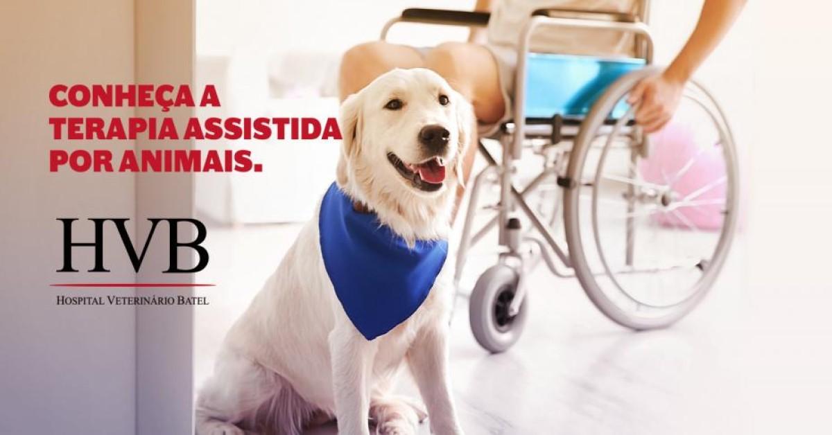 Terapia Assistida por Animais