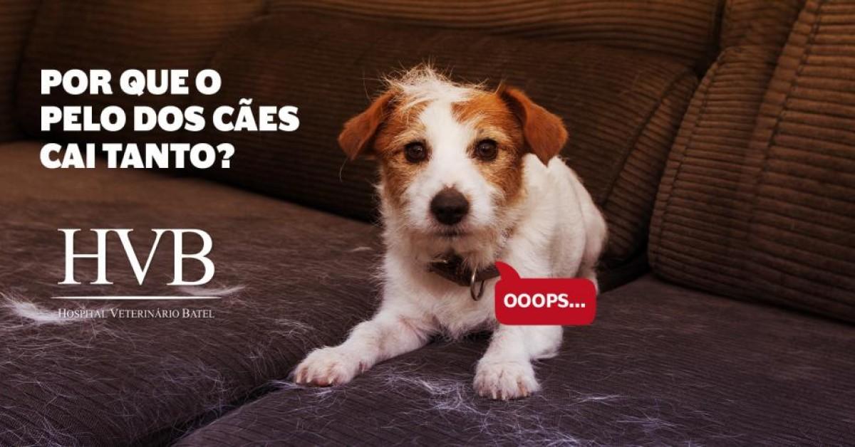 Por que o pelo dos cães cai tanto?