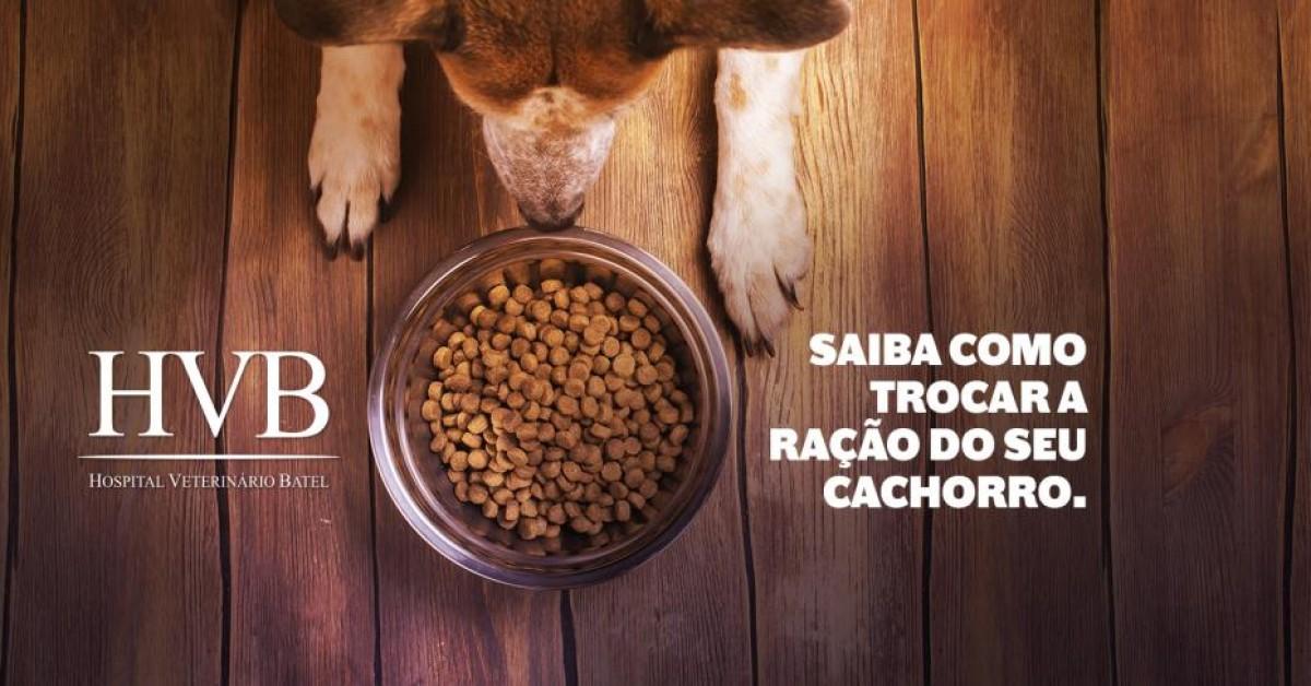 Quer trocar a ração do seu cão? Saiba como.