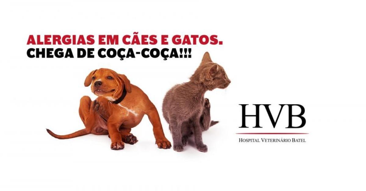 Alergias em cães e gatos: chega de coça-coça!
